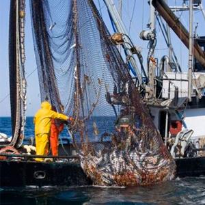 واردات ماهی و میگو